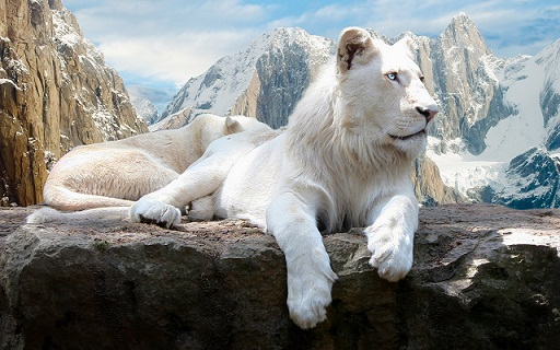 Out-of-the-world lions (16)