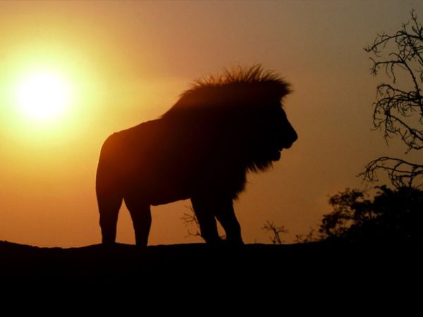 Out-of-the-world lions (8)
