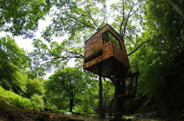 Treehouses (10)