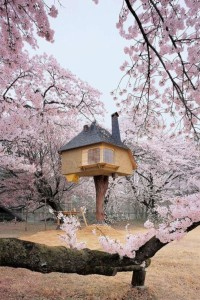 15 Stunning Treehouses
