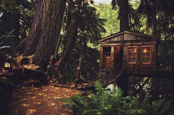 Treehouses (8)