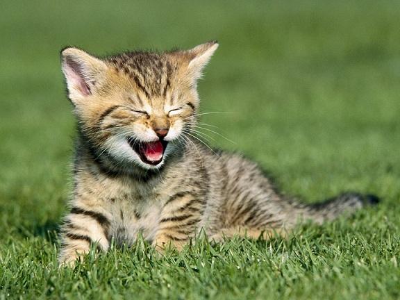 cuttest-kittens (1)