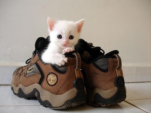 cuttest-kittens (10)