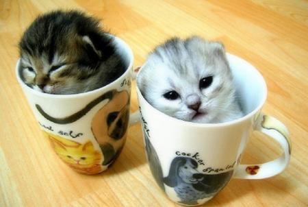cuttest-kittens (11)