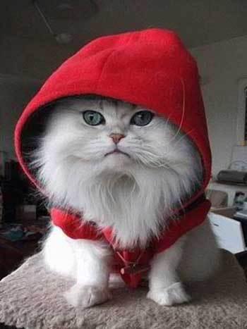 cuttest-kittens (12)