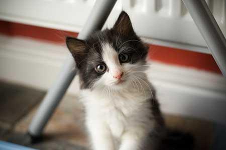 cuttest-kittens (13)