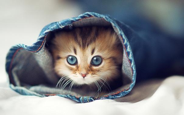 cuttest-kittens (14)
