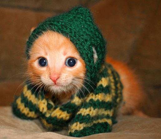 cuttest-kittens (15)
