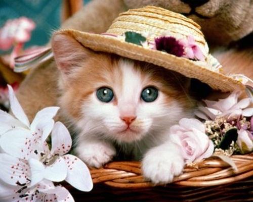 cuttest-kittens (2)