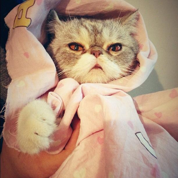 cuttest-kittens (3)