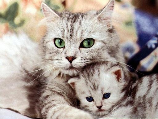 cuttest-kittens (4)