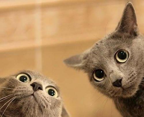 cuttest-kittens (5)