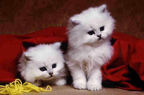 cuttest-kittens (6)