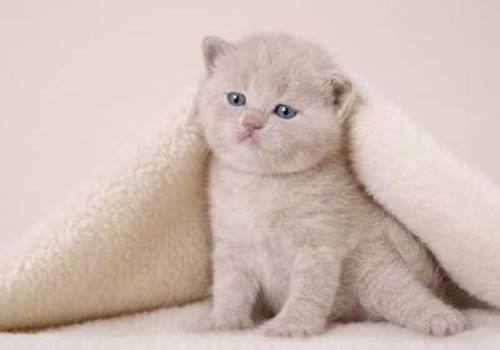 cuttest-kittens (7)