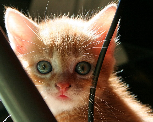 cuttest-kittens (8)