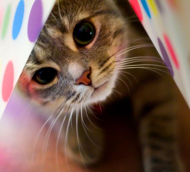 cuttest-kittens (9)
