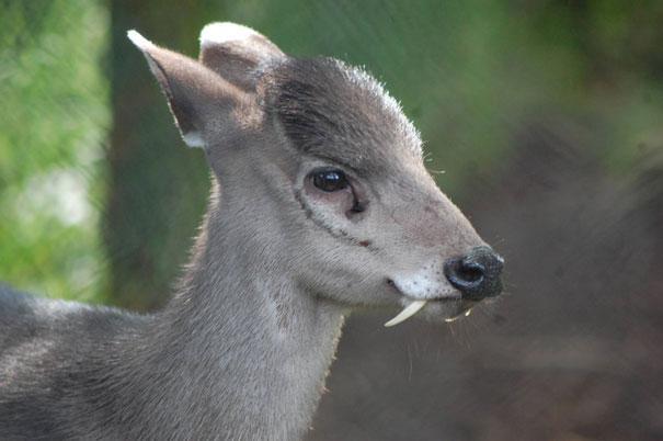 dramatically strange animals (11)