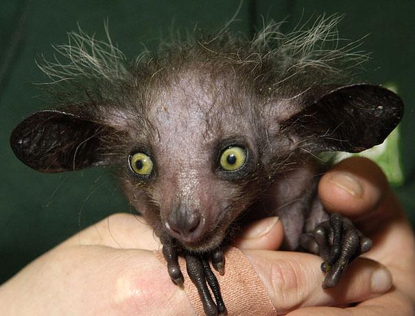 dramatically strange animals (3)