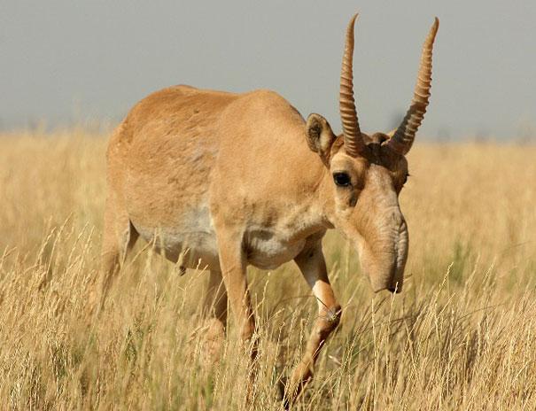 dramatically strange animals (5)