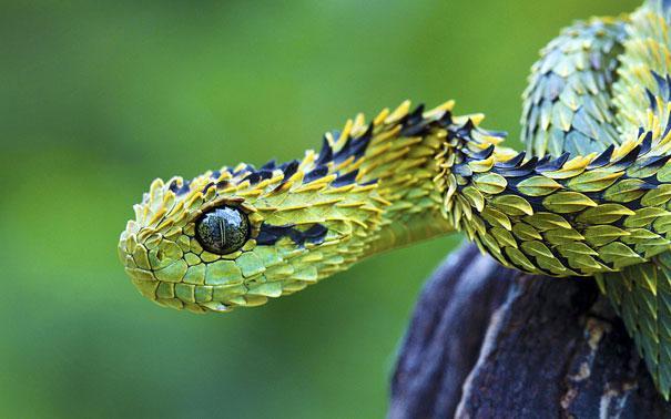 dramatically strange animals (6)