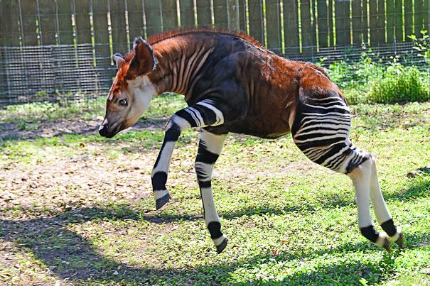 dramatically strange animals (9)