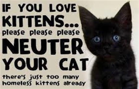 Neuter your Cat