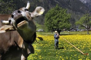 33 Most Hilarious Animal Photobombs of All The Time