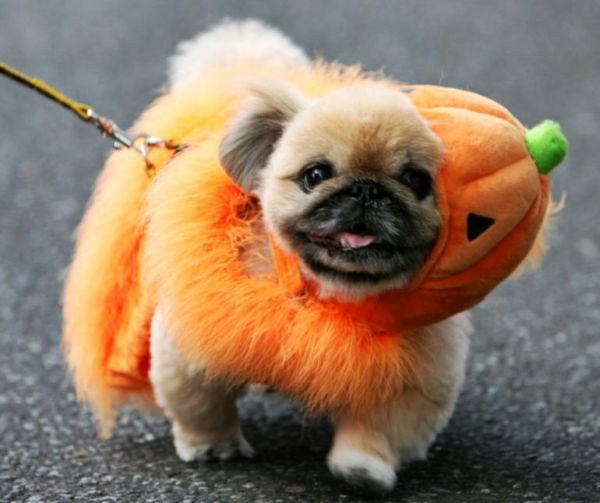 fantastic halloween (4)