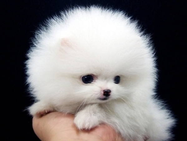 13 Exclusive Fluffiest Dogs Ever Seen (1)