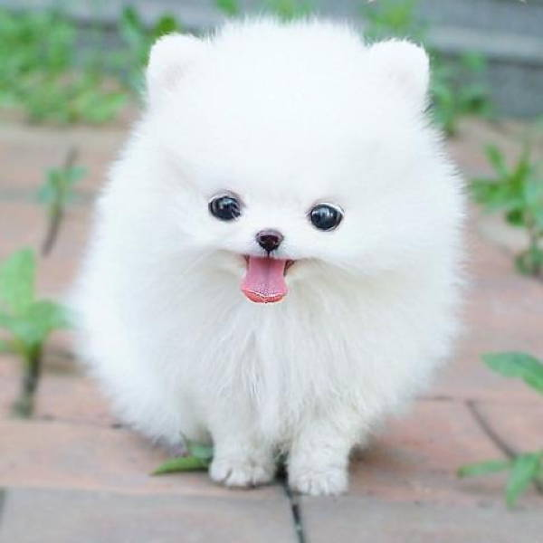 13 Exclusive Fluffiest Dogs Ever Seen (3)