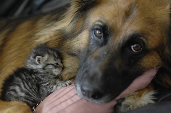 25 Loving Friends Forever Animals (13)