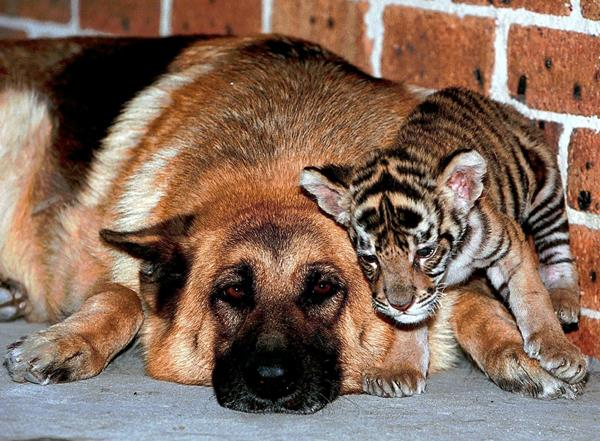 25 Loving Friends Forever Animals (14)