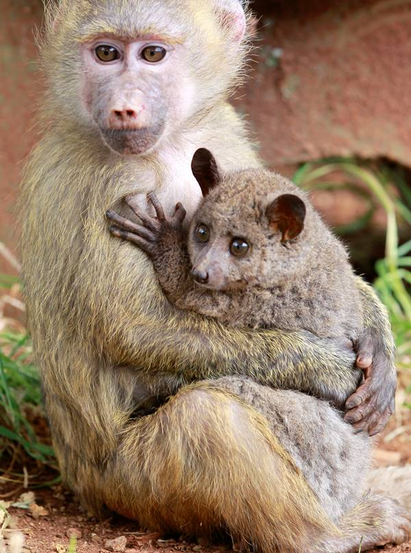 25 Loving Friends Forever Animals (17)