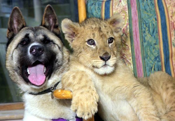 25 Loving Friends Forever Animals (2)