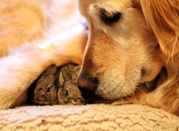 25 Loving Friends Forever Animals (7)