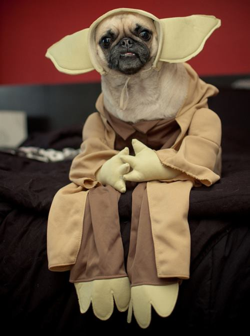 25 Ridiculously Funny Costumes A Dog Can Ever Have (1)