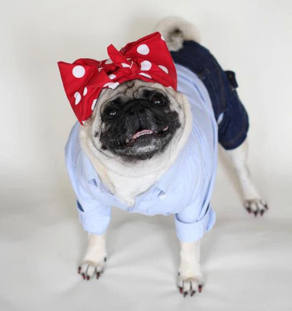 25 Ridiculously Funny Costumes A Dog Can Ever Have (12)