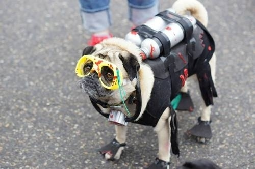 25 Ridiculously Funny Costumes A Dog Can Ever Have (13)