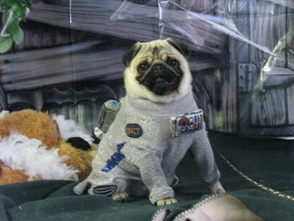 25 Ridiculously Funny Costumes A Dog Can Ever Have (14)