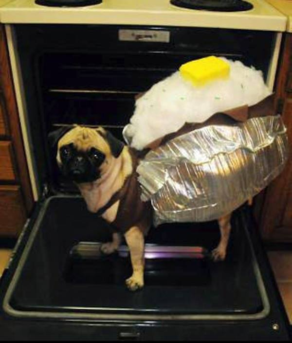 25 Ridiculously Funny Costumes A Dog Can Ever Have (15)