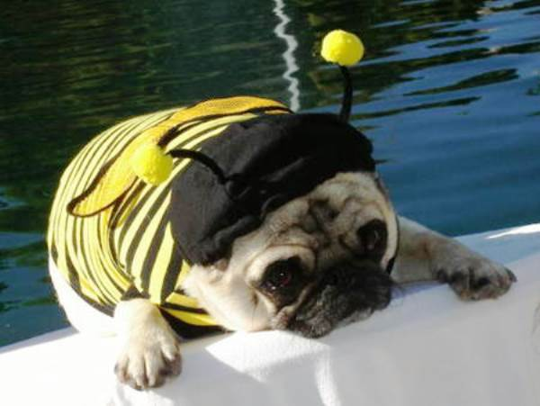 25 Ridiculously Funny Costumes A Dog Can Ever Have (16)