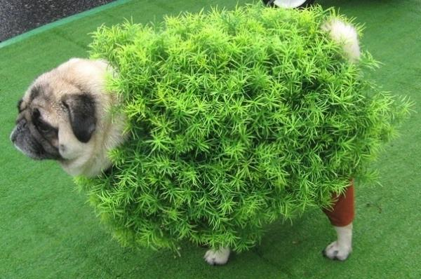 25 Ridiculously Funny Costumes A Dog Can Ever Have (17)