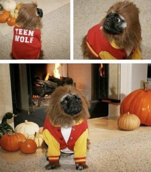 25 Ridiculously Funny Costumes A Dog Can Ever Have (20)