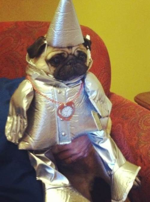 25 Ridiculously Funny Costumes A Dog Can Ever Have (21)
