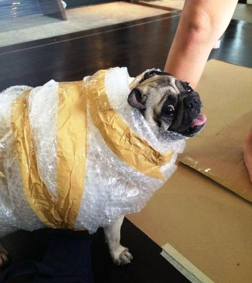 25 Ridiculously Funny Costumes A Dog Can Ever Have (22)