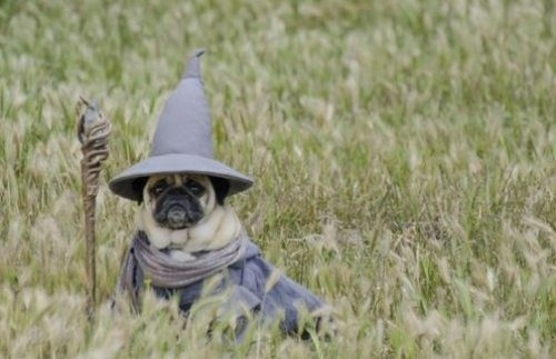 25 Ridiculously Funny Costumes A Dog Can Ever Have (24)