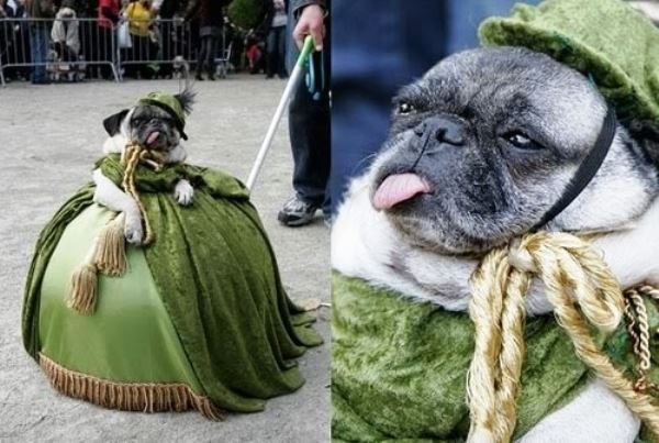 25 Ridiculously Funny Costumes A Dog Can Ever Have (25)