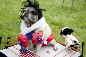 The 25 Insanely Funny Dog Costumes Ever