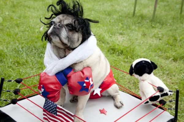 25 Ridiculously Funny Costumes A Dog Can Ever Have (4)