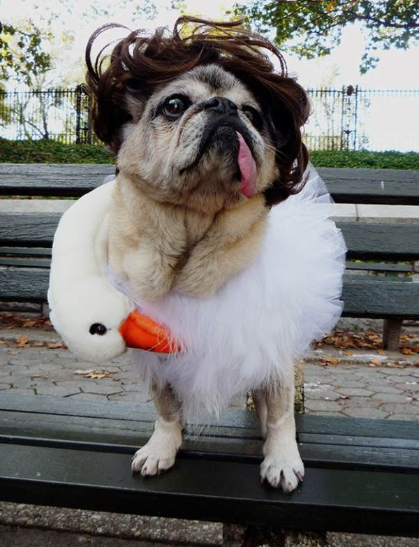 25 Ridiculously Funny Costumes A Dog Can Ever Have (5)